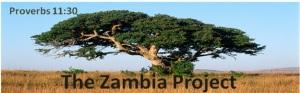 zambiatree
